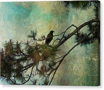 The Old Pine Tree Canvas Print by Gothicrow Images