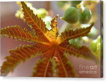 Canvas Print featuring the photograph  Transparency by Michelle Meenawong