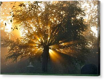 Tree Burst Canvas Print by David Flitman