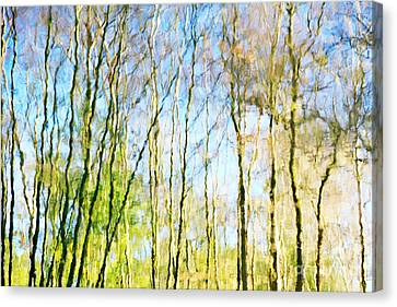 Tree Reflections Abstract Canvas Print by Natalie Kinnear