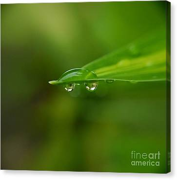 Canvas Print featuring the photograph  Two Drops by Michelle Meenawong