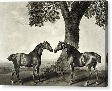 Countryside Canvas Print -  Two Hunters  by GT Stubbs