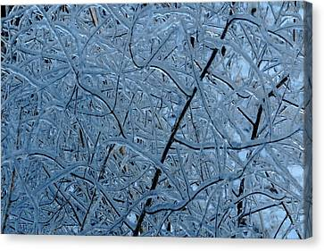 Vegetation After Ice Storm  Canvas Print by Daniel Reed