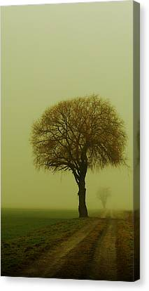 Canvas Print featuring the photograph  Walk In The Fog by Franziskus Pfleghart
