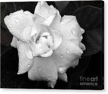 Canvas Print featuring the photograph  White Drops by Michelle Meenawong