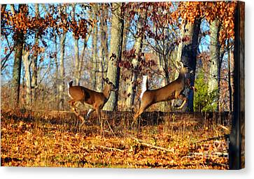 White Tail Deer Leaping  Canvas Print by Peggy Franz