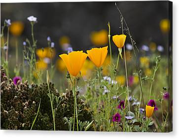 Wildflowers Explode Canvas Print