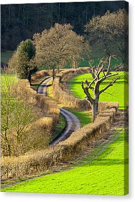Winding Country Lane Canvas Print