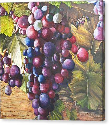 Wine Grapes On A Vine Canvas Print