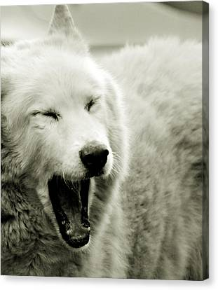 Cabin Wall Canvas Print -  Yawning by Chastity Hoff