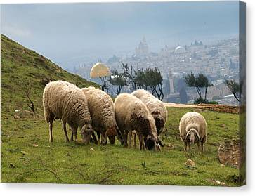 003 Jerusalem Canvas Print by Alex Kolomoisky