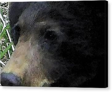 01042014 Black Bear Alaska Canvas Print