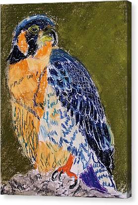 092914 Paragon Falcon Canvas Print by Garland Oldham
