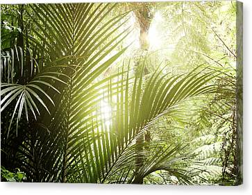 Jungle Light Canvas Print by Les Cunliffe