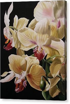 Alfred Ng Art Canvas Print -  Yellow Orchids  by Alfred Ng