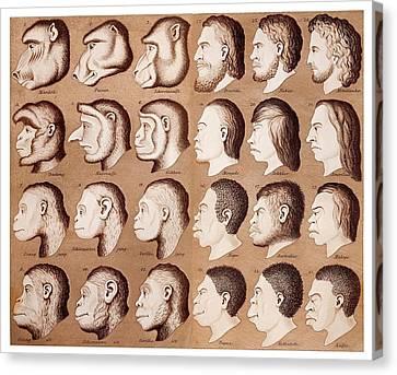 1870 Haeckel Racist Human Illustration Canvas Print by Paul D Stewart