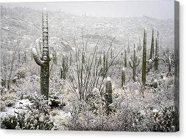 A Desert Snow Day  Canvas Print by Saija  Lehtonen
