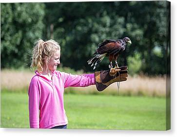 A Falconry Display Canvas Print by Ashley Cooper