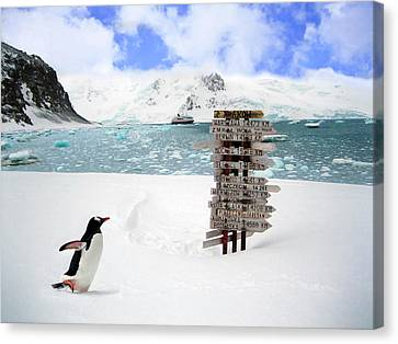 A Gentoo Penguin (pygoscelis Papua Canvas Print by Miva Stock