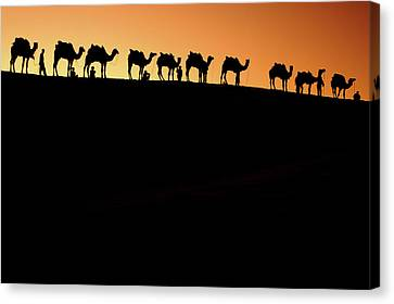 Camel Canvas Print - A Group Of Camel Herders by Piper Mackay