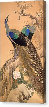 A Pair Of Peacocks In Spring Canvas Print by Mountain Dreams