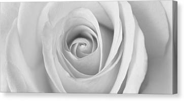 Canvas Print featuring the photograph A Rose Is A Rose Is... by Silke Brubaker