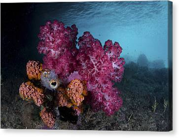 A Soft Coral Colony And Invertebrates Canvas Print