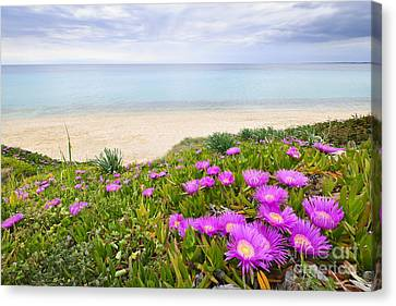 Aegean Sea Coast In Greece Canvas Print by Elena Elisseeva