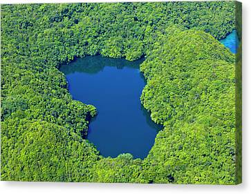 Aerial View Of Jelly Fish Lake Canvas Print by Keren Su