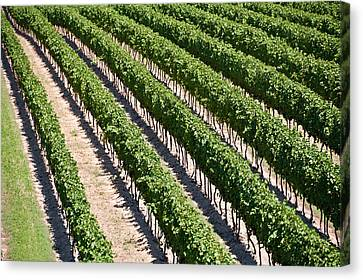 Canvas Print featuring the photograph Aerial View Of Vineyard In Ontario Canada by Marek Poplawski