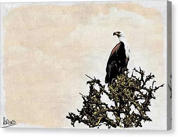 African Fish Eagle Canvas Print by Perla Copernik