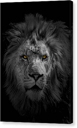 Canvas Print featuring the photograph African Lion by Peter Lakomy