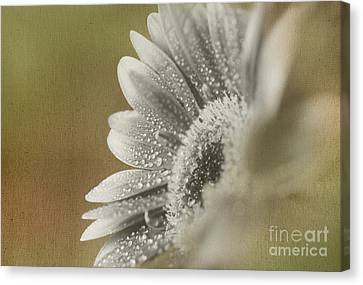 After The Rain Canvas Print by Eden Baed