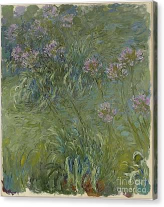 Agapanthus Canvas Print - Agapanthus by Claude Monet