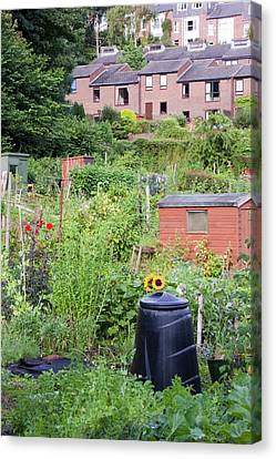Allotments Canvas Print by Ashley Cooper