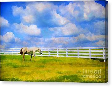 Kentucky Horse Park Canvas Print - Alone by Darren Fisher