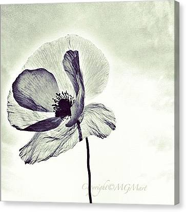 Instamood Canvas Print - Alone by Marianna Mills