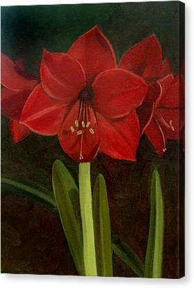 Amaryllis Canvas Print by Nancy Griswold