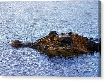 Canvas Print featuring the photograph Amazon Alligator by Henry Kowalski