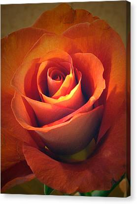 Amber Rose Canvas Print