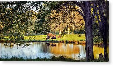 American Bison Canvas Print by Sennie Pierson