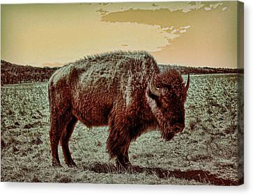 American Buffalo  Canvas Print by Tony Grider