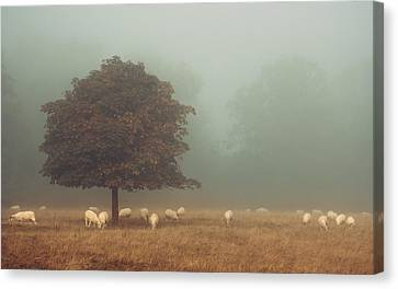Amongst The Flock On An Autumn Morning Canvas Print by Chris Fletcher