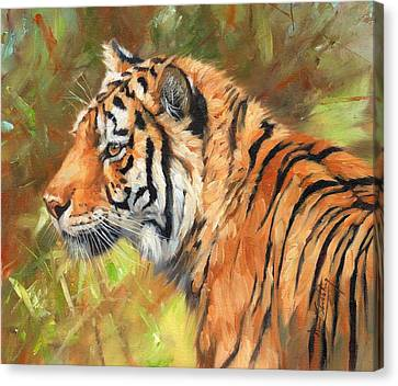 Amur Tiger Painting Canvas Print by David Stribbling