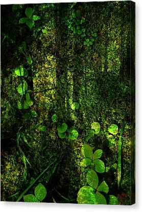An Earthy Place Canvas Print by Shirley Sirois