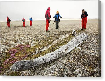 Ancient Whale Jaw Bones On Raised Beach Canvas Print by Ashley Cooper