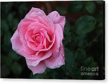 Angel Face Rose Canvas Print