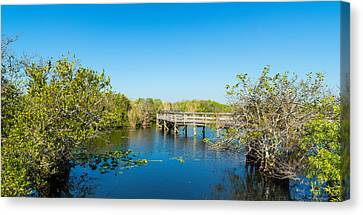 Anhinga Canvas Print - Anhinga Trail Boardwalk, Everglades by Panoramic Images