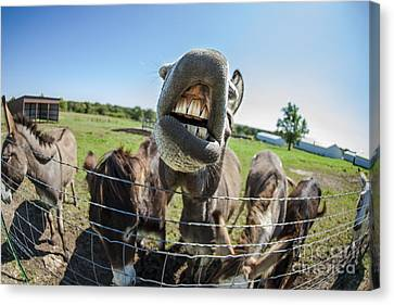 Animal Personalities Silly Talking Donkey With Whiskers Canvas Print by Jani Bryson