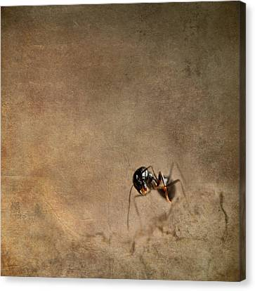 Floor Canvas Print - ant by Heike Hultsch